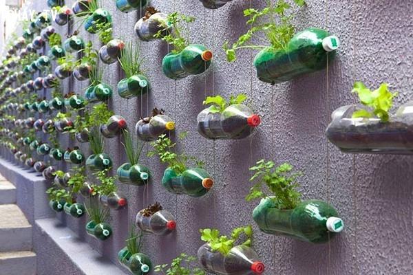Vườn treo,vỏ chai nhựa,tái sử dụng,tái chế vỏ chai