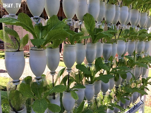 Vườn sau sạch tại nhà,vỏ chai nhựa,tái sử dụng,tái chế vỏ chai