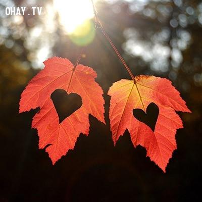 Hình 3: Tình yêu là một thứ rất to lớn với bạn,tình yêu,trắc nghiệm vui
