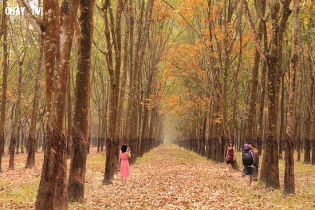 Đồng Nai, Bình Phước – Cao su mùa rụng lá,