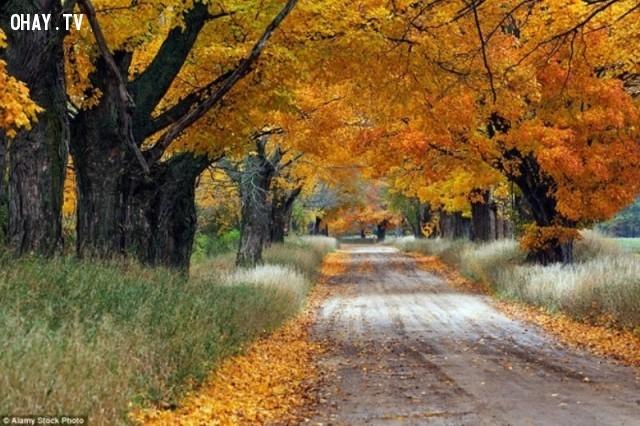 Đường Conrad ở Ludington, Michigan -  Mỹ,