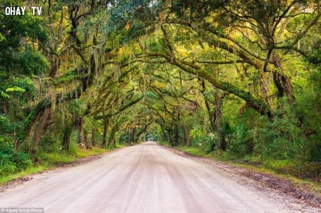 Lối vào đồn điền Botany Bay, nam Carolina -  Mỹ,