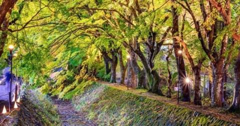 Những đường cây đẹp đến mê hồn