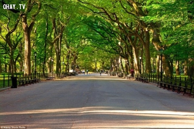 Đường ở công viên trung tâm, Manhattan, New York -  Mỹ,