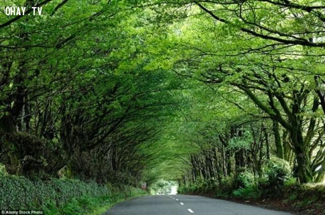Đường ở Milton Abbot, Devon - Anh,