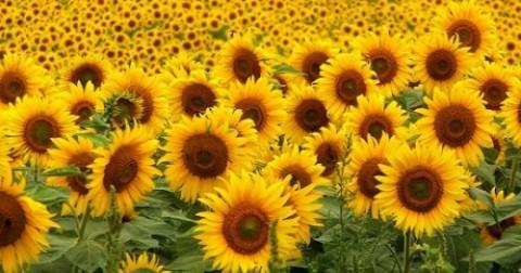 Sự tuyệt vọng cũng đẹp như một bông hoa !!!