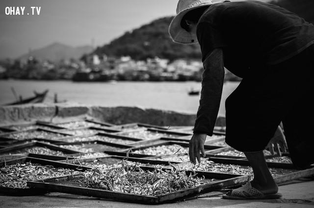 Phơi cá ở cảng Hòn Rớ, Nha Trang,ảnh đẹp,việt nam,nhiếp ảnh