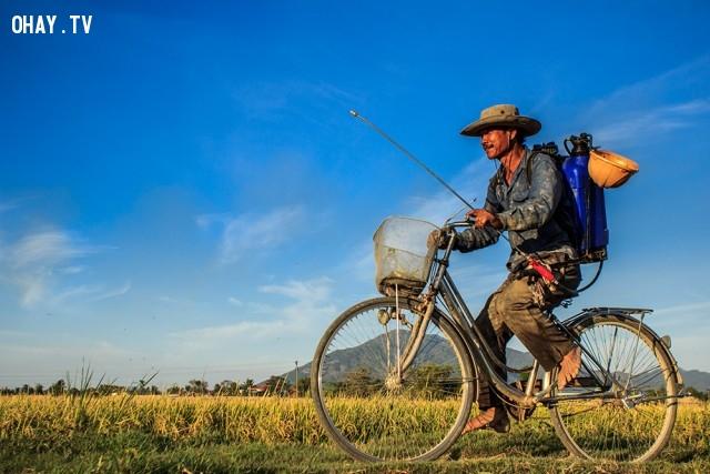 Nông dân làm đồng trở về nhà,ảnh đẹp,việt nam,nhiếp ảnh