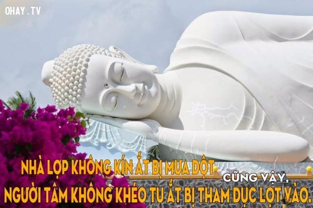 Nhà lợp không kín ắt bị mưa dột. Cũng vậy,người tâm không khéo tu ắt bị tham dục lọt vào.,triết lý,lời Phật dạy,suy ngẫm,câu nói hay,phật giáo