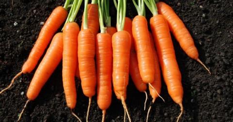 Tìm hiểu những công dụng khác của cà rốt ngoài khả năng nâng cao năng lực thị giác