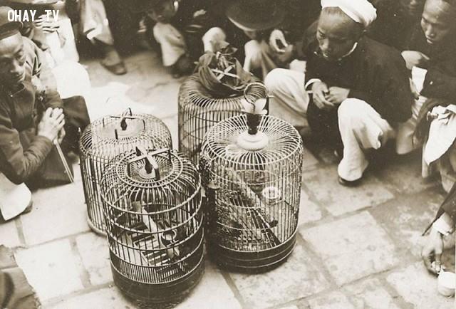 Hội thi chim, đầu thế kỷ 20,Việt nam xưa,Việt Nam thế kỷ 18,Ảnh cổ Việt Nam
