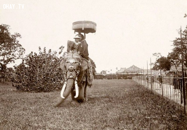 Ngự lâm quân triều Nguyễn cưỡi voi - khoảng thời vua Khải Định,Việt nam xưa,Việt Nam thế kỷ 18,Ảnh cổ Việt Nam