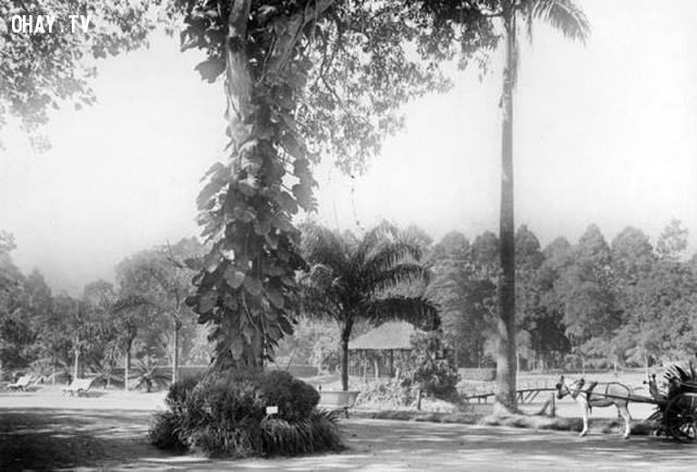 Thảo Cầm Viên Sài Gòn năm 1895,Việt nam xưa,Việt Nam thế kỷ 18,Ảnh cổ Việt Nam