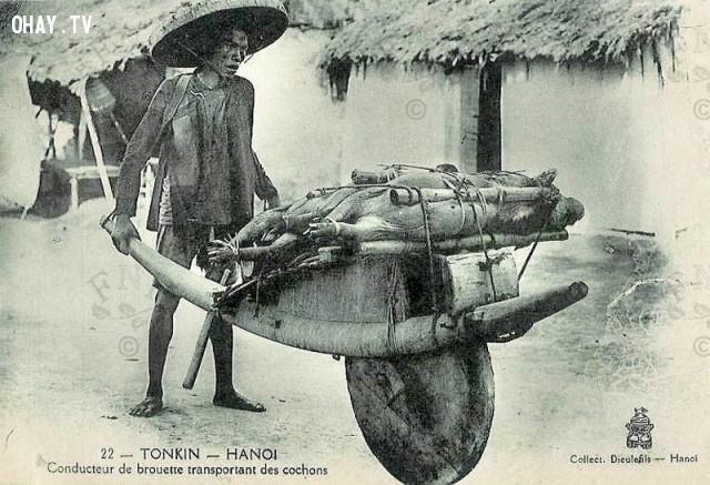 Chở lợn ra chợ bán ở Hà Nội cuối thế kỷ 19,Việt nam xưa,Việt Nam thế kỷ 18,Ảnh cổ Việt Nam