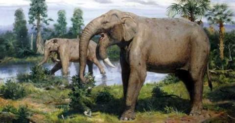 15 sinh vật kỳ lạ thời tiền sử sẽ khiến bạn thích thú