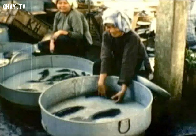 Chợ cá bến lở 1966,Bến Tre xưa,Xứ dừa,hình xưa,ảnh cổ,ảnh lịch sử