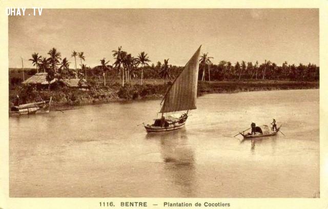 Plantation de cocotiers - Vườn dừa, thời Pháp,Bến Tre xưa,Xứ dừa,hình xưa,ảnh cổ,ảnh lịch sử