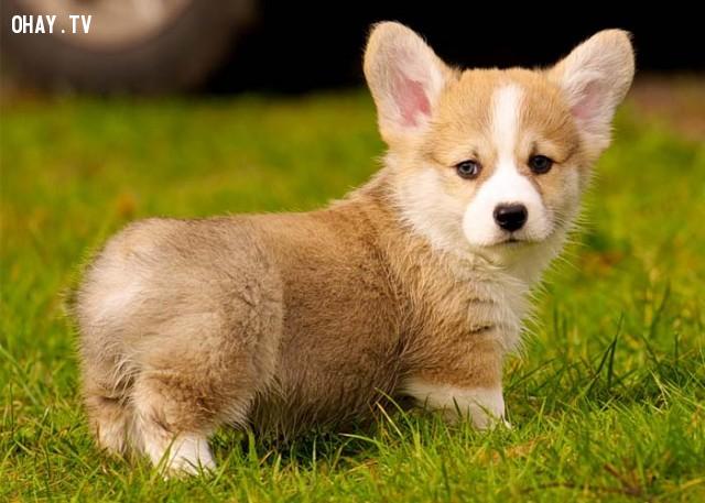 Nếu bạn thích nuôi một chú cún,trắc nghiệm vui,trắc nghiệm tính cách