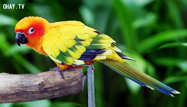 Nếu bạn thích một chú vẹt,trắc nghiệm vui,trắc nghiệm tính cách