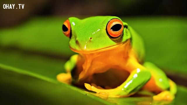 Nếu bạn khoái rắn, ếch hoặc 1 loài bò sát lạ lùng nào đó,trắc nghiệm vui,trắc nghiệm tính cách