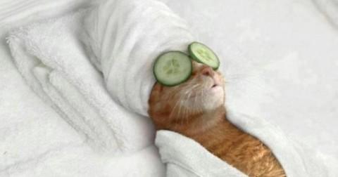 30 khoảnh khắc đáng yêu của những chú mèo