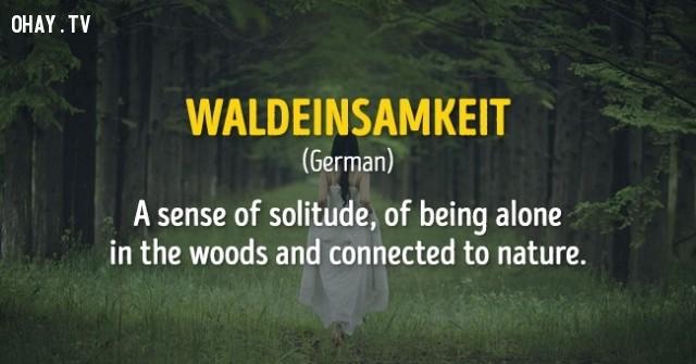 Một cảm giác của tình trạng cô đơn, một mình trong cánh rừng và hòa mình với thiên nhiên,cụm từ,nước ngoài,không dịch được