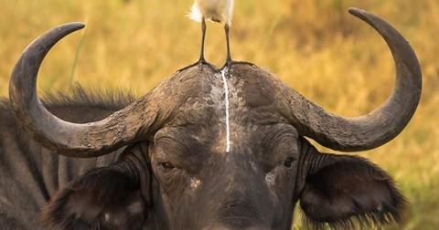59 bức ảnh động vật hài hước cho ngày cuối tuần cười xả láng