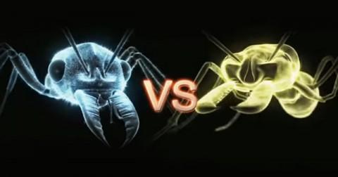 Trận chiến của những loài côn trùng - P1