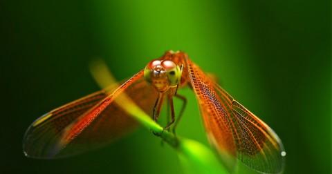 5 hình ảnh đẹp về côn trùng có thể bạn chưa từng biết đến