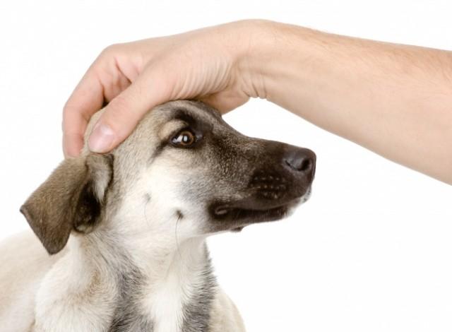 Xoa đầu,thú cưng,loài chó