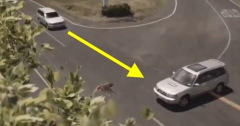 Nổi da gà với video tuyên truyền an toàn giao thông