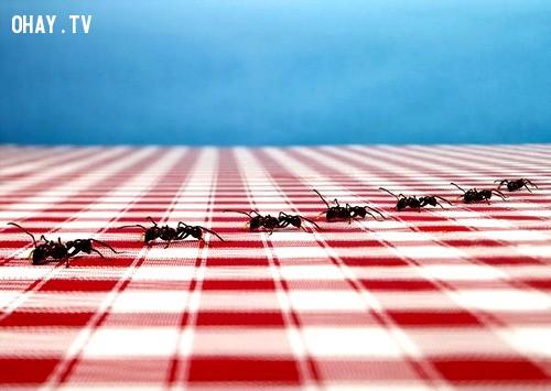 Các bạn biết không?,1001 câu hỏi vì sao,loài kiến,thế giới động vật