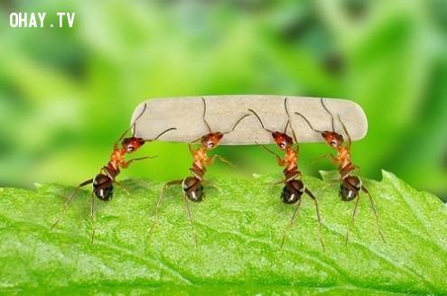 Mùi đánh dấu này có tính đặc trưng loài rất hẹp,1001 câu hỏi vì sao,loài kiến,thế giới động vật