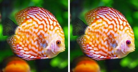 Thử tài tinh mắt: Đố bạn tìm ra điểm khác nhau giữa những cặp ảnh này