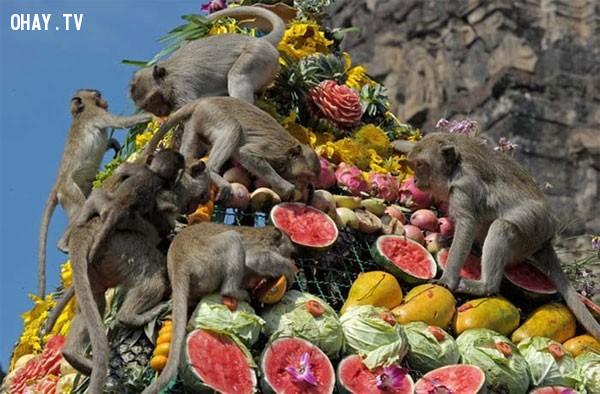 Lễ hội của khỉ - Thái Lan,lễ hội,phong tục