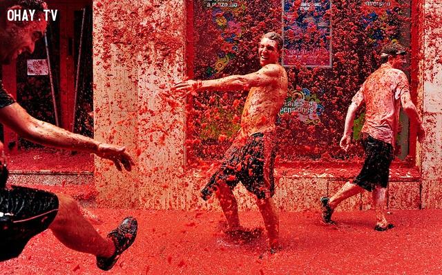 Lễ hội cà chua - Tây Ban Nha,lễ hội,phong tục