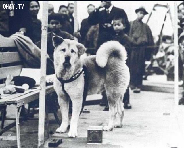 8. Đây là ảnh của chú chó nổi tiếng nhất thế giới - Hachiko,những điều thú vị trong cuộc sống,có thể bạn chưa biết,facts