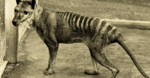 5 loài động vật tưởng đã tuyệt chủng nhưng có dấu hiệu trở lại