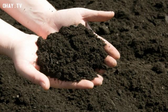 1. Cải tạo đất sau mỗi vụ:,trồng rau trên sân thượng,trồng rau trong chậu,vườn rau sạch,trồng rau sạch tại nhà