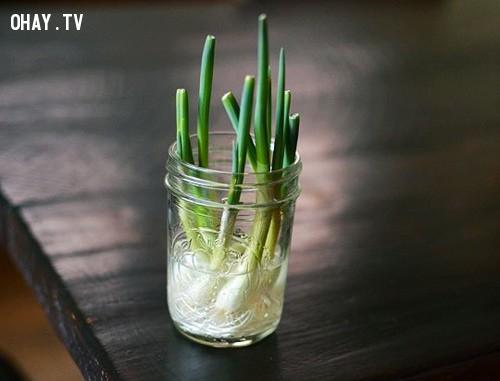 4. Hành lá,rau sạch,thực phẩm sạch,trồng rau sạch tại nhà