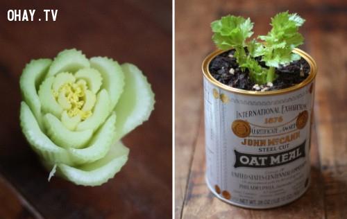 8. Cần tây,rau sạch,thực phẩm sạch,trồng rau sạch tại nhà