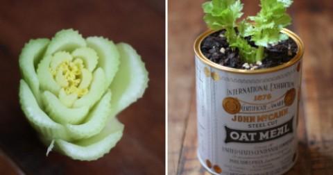 Bạn đã biết cách trồng 10 loại rau sạch từ...rác thực phẩm?!