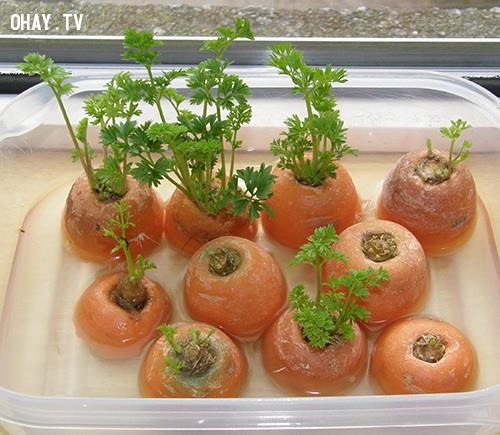 2. Cà rốt,rau sạch,thực phẩm sạch,trồng rau sạch tại nhà