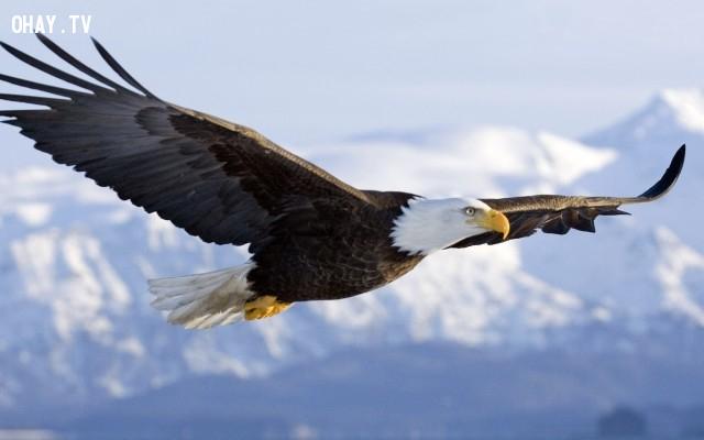 ,Dạy con,Đại bàng,Sức mạnh,Lòng can đảm