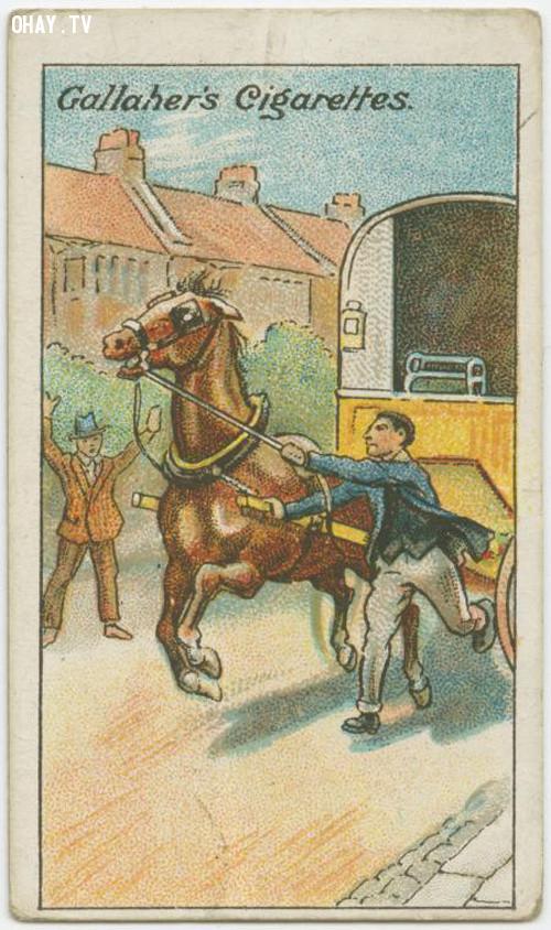 9. Mẹo giảm tốc ngựa chạy,kỹ năng sinh tồn,mẹo hay