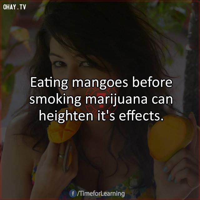11. Ăn xoài trước khi hút marijuana* (bồ đà) có thể nâng cao hiệu quả của nó.,mẹo hay