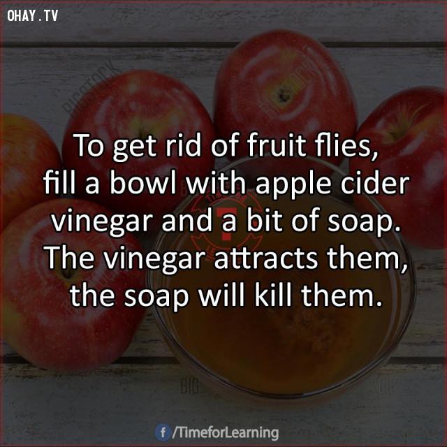 7. Để loại bỏ ruồi giấm, hãy đổ đầy một bát giấm táo với một ít xà phòng. Giấm sẽ thu hút chúng, xà phòng sẽ giết chúng.,mẹo hay