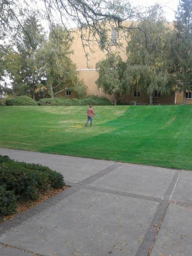 Các bãi cỏ xanh mướt,những điều thú vị trong cuộc sống