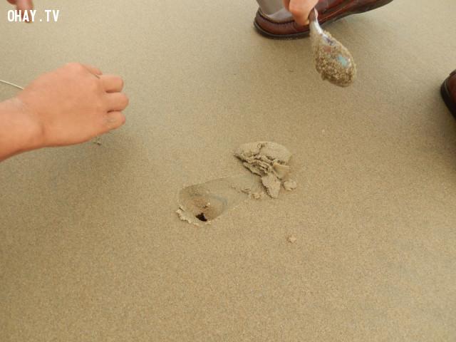 Còn đây là nhà của chúng trên bờ biển. Người ta có thể dùng ốc xoắn để câu nó,những điều thú vị trong cuộc sống