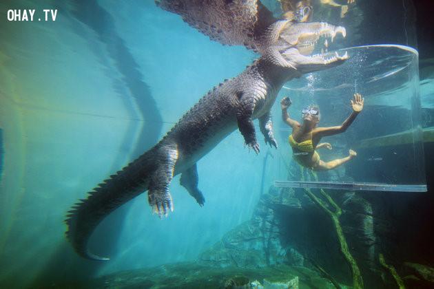 3. Bơi cùng cá sấu trong Lồng tử thần,trò chơi cảm giác mạnh